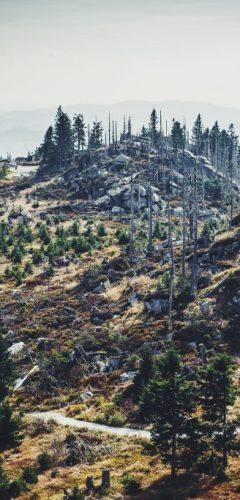 agricultura de precisió amb dron - reforestació